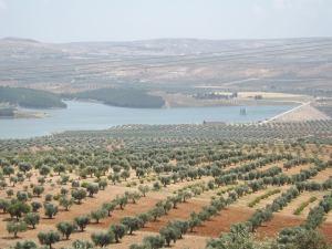 Efrin- Syria 2013